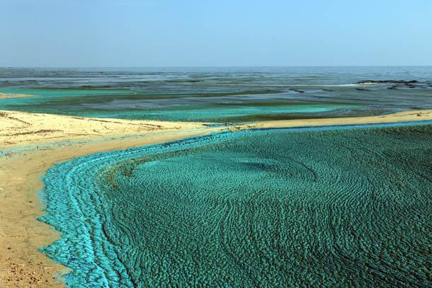 побережье Куршского залива