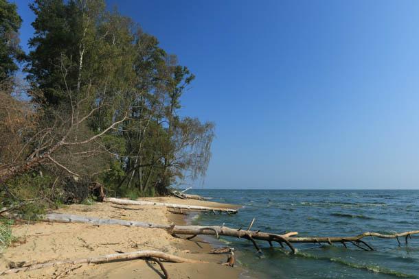 поваленные ветром деревья на побережье