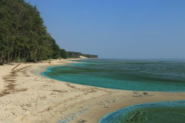 цветущий залив сине-зеленого цвета