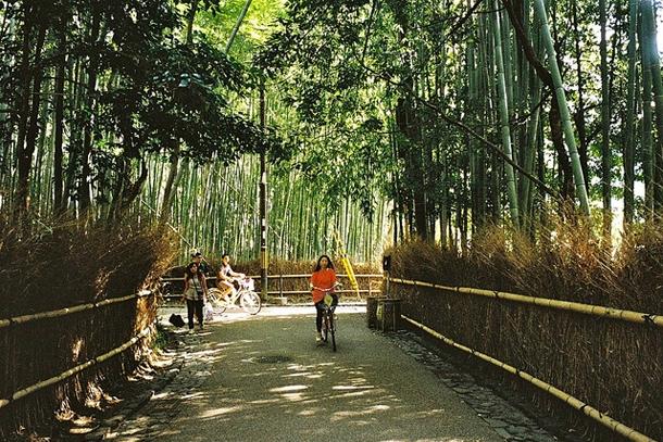 Велосипедист в бамбуковом лесу