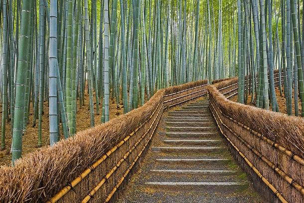 Дорожка в бамбуковом лесу Сагано