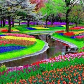 Кёкенхоф — королевство цветов в Нидерландах