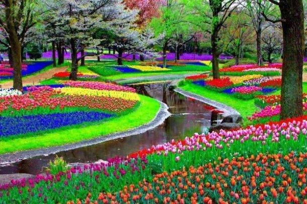 Картинки по запросу парк цветов в нидерландах