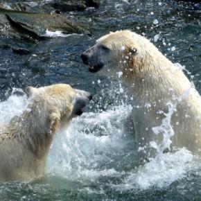 Зоопарк в Ганновере – приятное место для отдыха