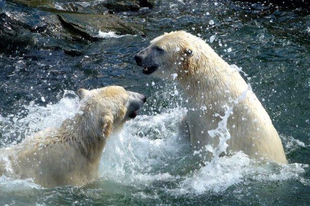 Юкон, зоопарк в Ганновере
