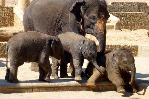 Дворец джунглей, зоопарк в Ганновере