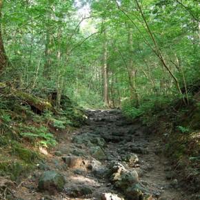 Лес самоубийц Аокигахара Дзюкай