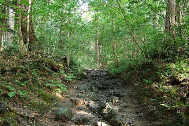 Тропинка в лесу самоубийц Аокигахара Дзюкай