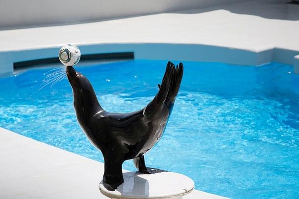 Выступление морского льва в Sea World