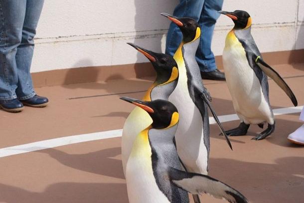 Пингвины океанариума Kamogawa Sea World