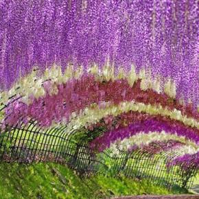Сад цветов Кавати Фудзи — тоннель из красивейших цветов