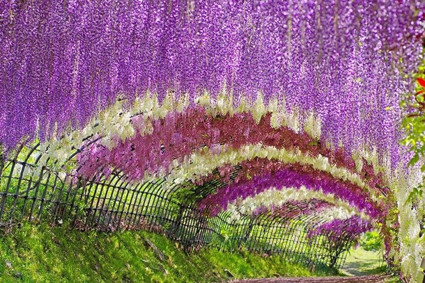 Сад цветов Кавати Фужи