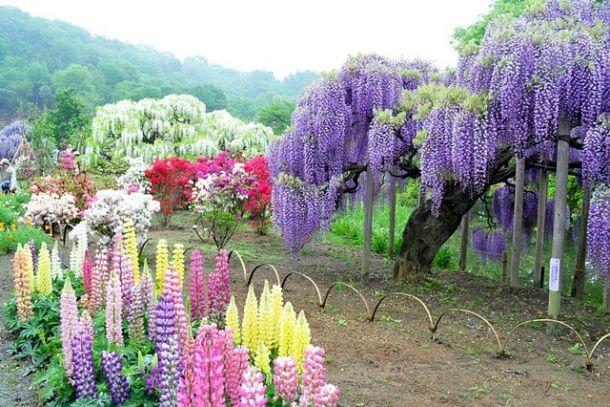 Разнообразие растений в Кавати Фуджи