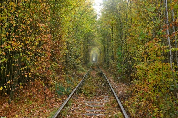 Зеленый тоннель для влюбленных