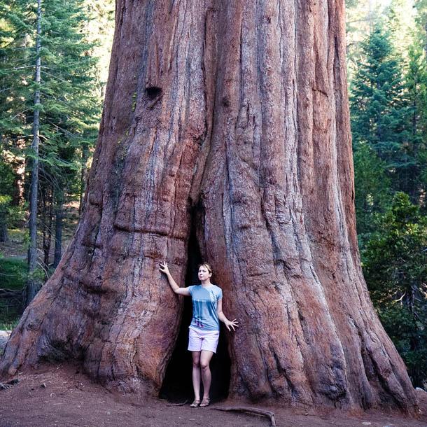 В национальном парке секвойи в Америке можно почувствовать себя лилипутом