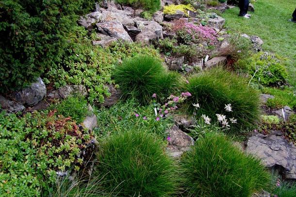 Ботанический сад, урочище Чистый луг