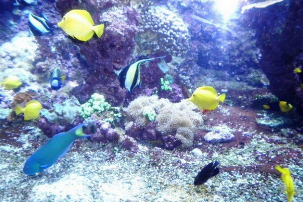Aquarium La Rochelle, Франция