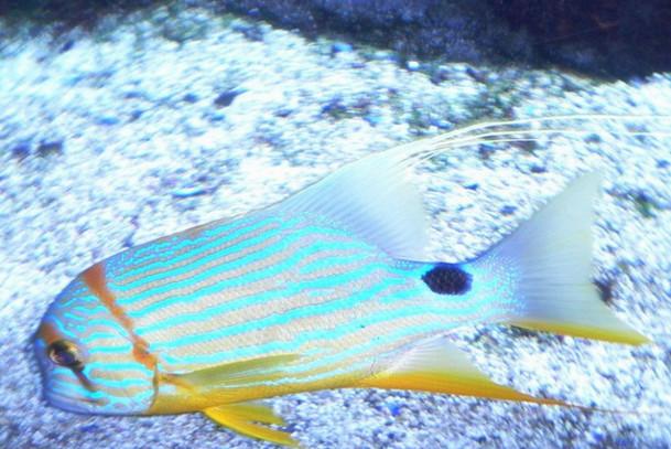 Морской мир Ла-Рошель, аквариум, Франция