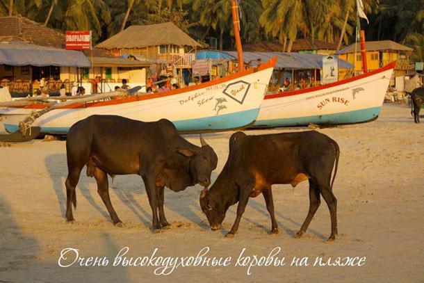 Типичный пляж в Индии
