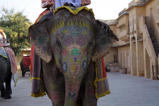 Индийский слон, расписанный хной