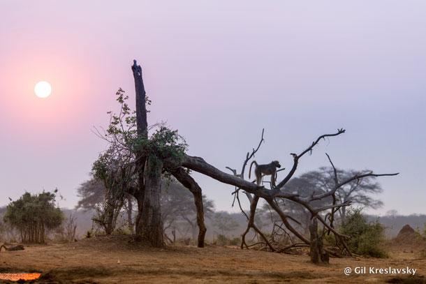 Африканское утро, район реки Чобе, Ботсвана