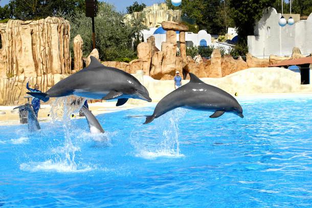 Парк развлечений Астерикс, шоу с дельфинами