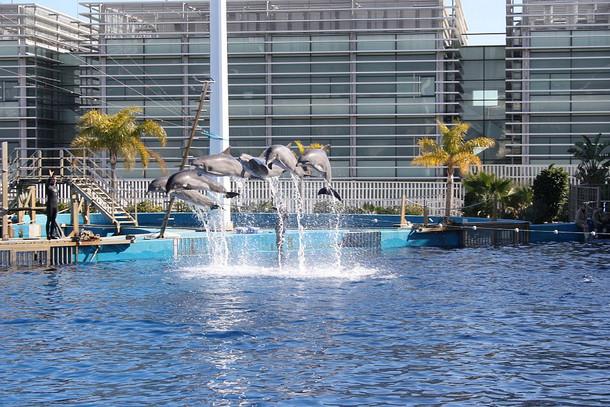 Океанариум Валенсии (L'Oceanogràfic), шоу с дельфинами