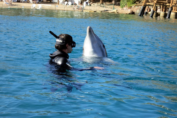 Дельфиний атракцион. Эйлат, 2014