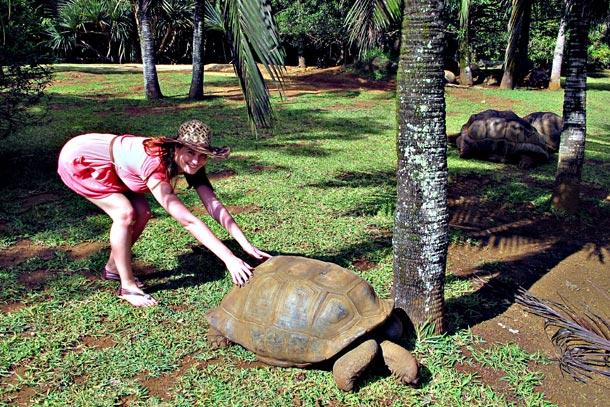 Маврикий. Большая сейшельская черепаха в Ванилла парк ( La Vanille Reserve park)