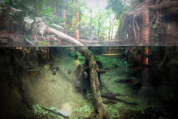 Макет джунглей русла реки Амазонки