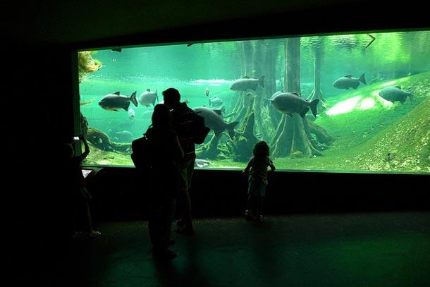 Фрагмент подводного мира